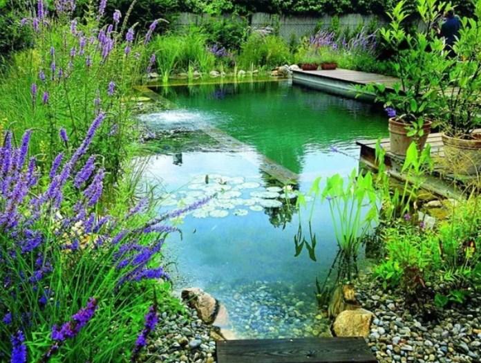 Борьба с водорослями в пруду