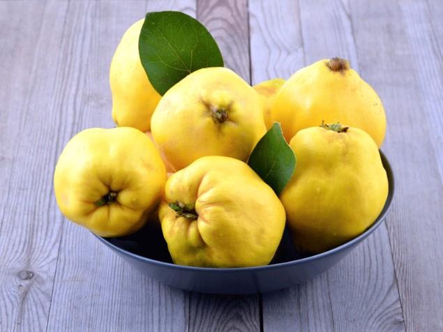 Айва плодовая