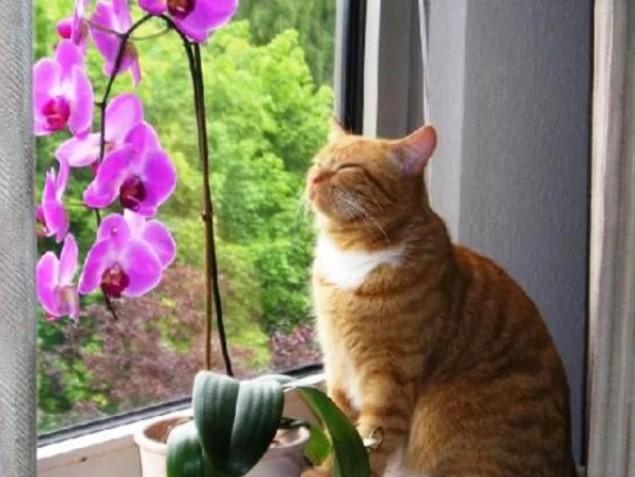 Растения в доме — живые питомцы