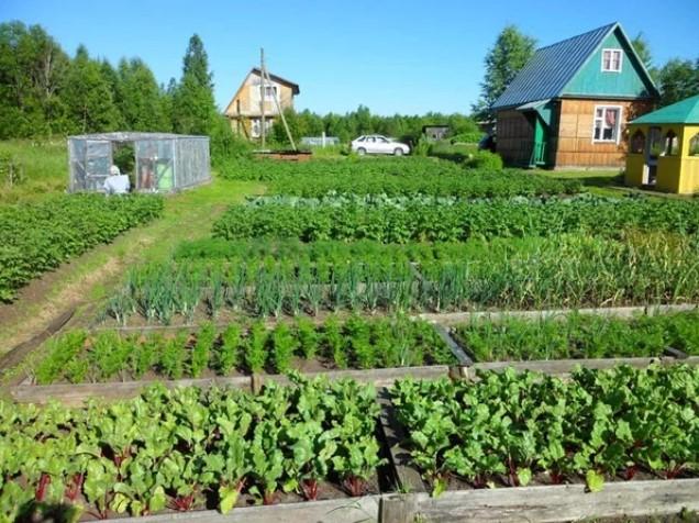 Огород – правильный полив овощных культур