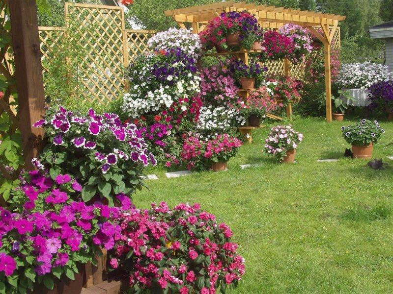 Великолепные петунии в саду