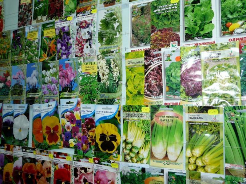 Как выбирать семена для посева в открытый грунт?