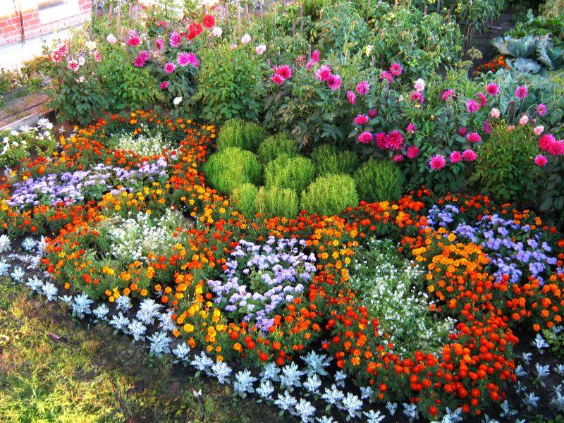 Сколько растений необходимо для клумбы? Как рассчитать?
