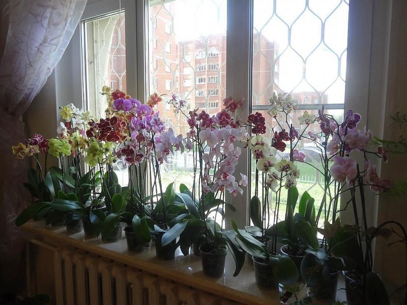 Уход за орхидеями после цветения - практические советы
