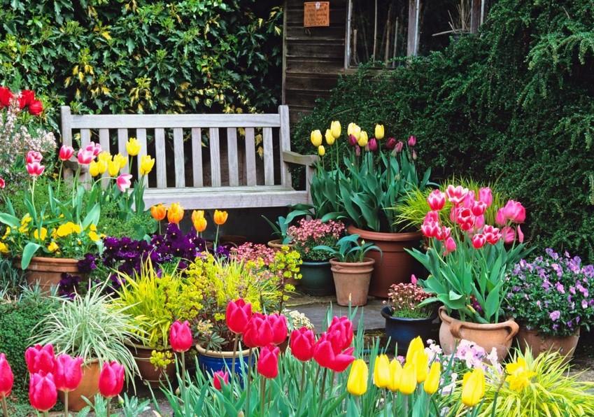 Цветовой дизайн с тюльпанами