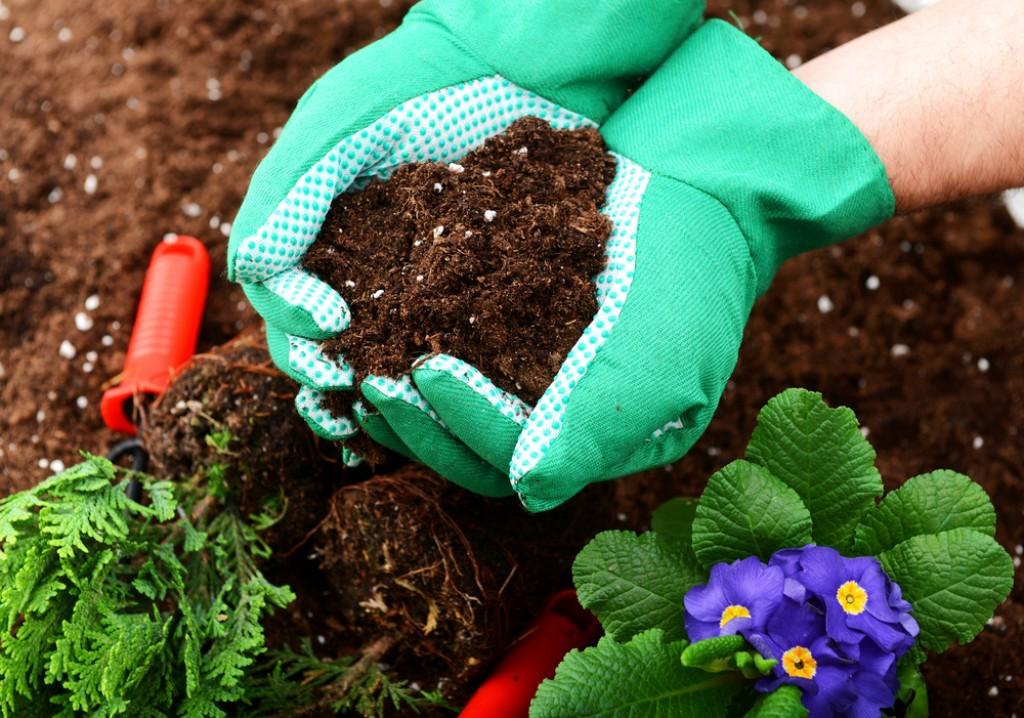 3 вида удобрений, которые стоит купить дачникам