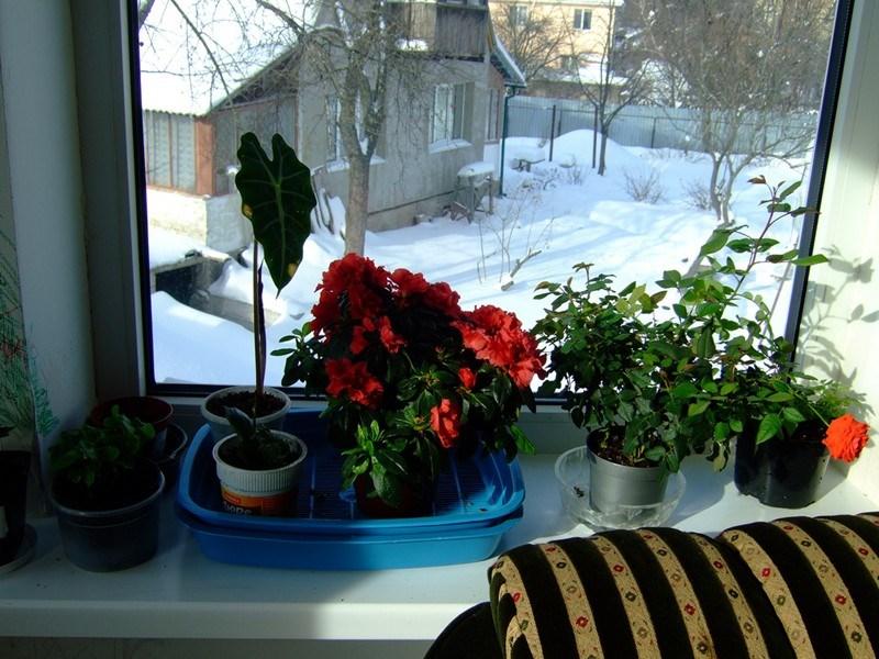 Уход зимой за цветами дома