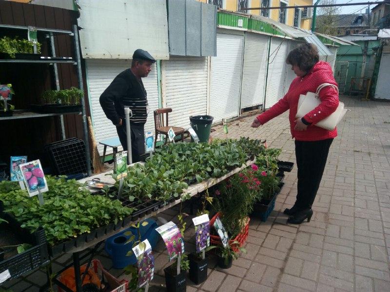 Как выбрать хорошую рассаду на рынке?