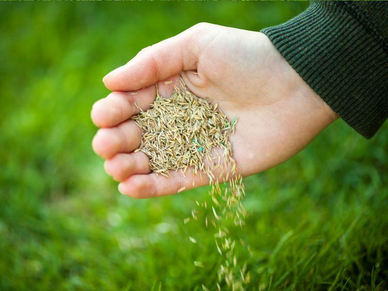 Как посадить траву для газона?