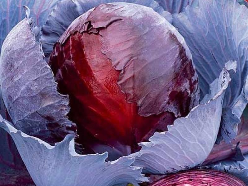 Краснокочанная капуста — польза и конкурентные преимущества