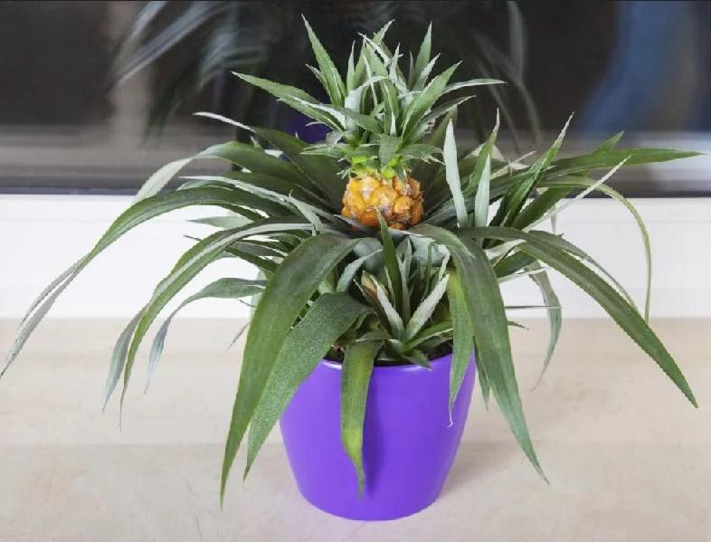 7 комнатных растений, которые можно есть