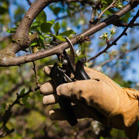 Полезна ли окольцовка деревьям?