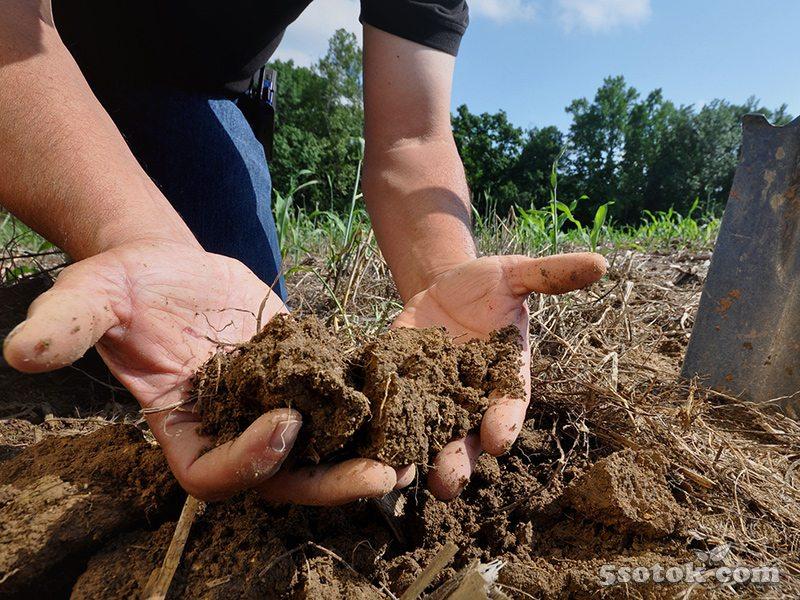 5 способов улучшения садовой почвы