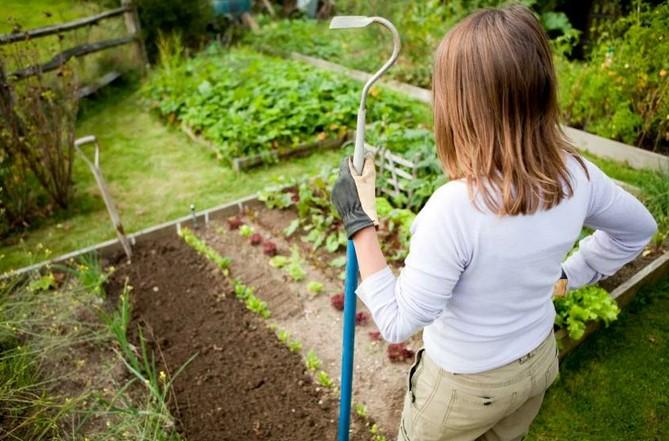 5 вещей, которые вы обязательно должны сделать в саду в начале августа